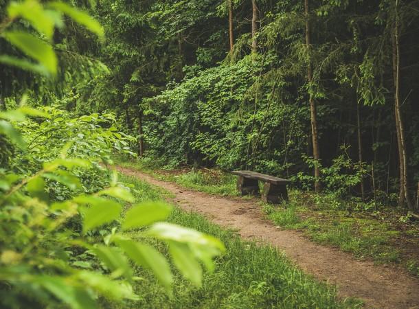 Las miejski, rzeka Wadąg